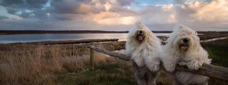 foto-cucciolo